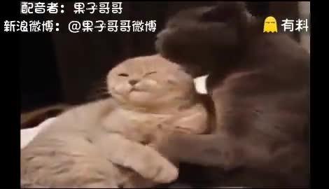 当动物遇上重庆方言,笑翻了有木有!!!
