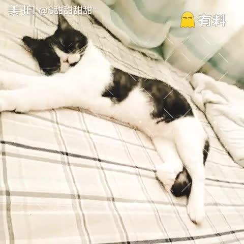 午休#宠物##猫咪成长记#☺