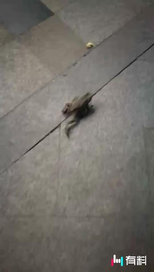 小青蛙你要去哪里?