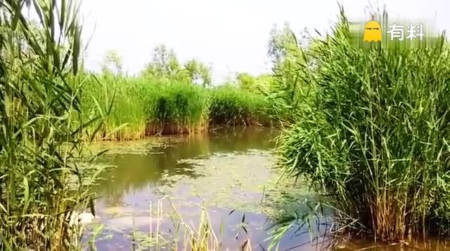 <自然之夏>#随手美拍##旅行##游园随手拍#...