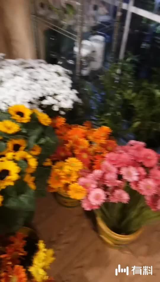 我用有料拍摄了一段酷炫的短视频,快来看我