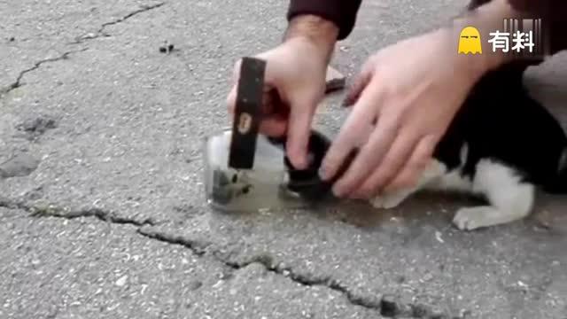 小猫头被卡玻璃罐 男子锤子砸罐解救