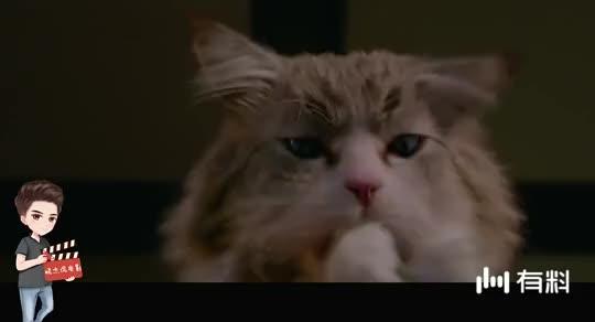 四分钟看完喜剧片《九条命》,霸道总裁变成小猫咪,太可爱了