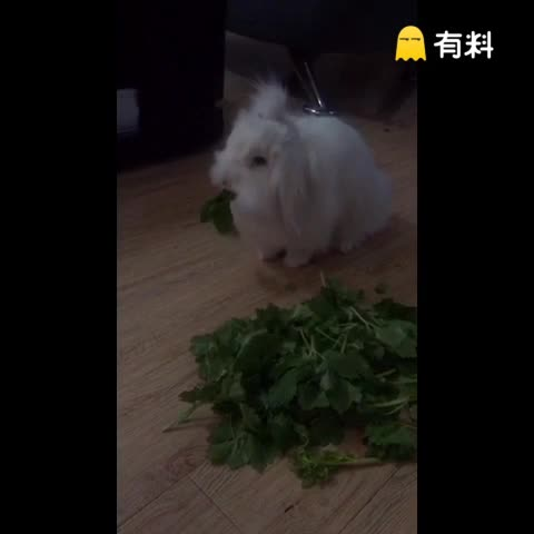 吧唧吧唧吧唧~爱吃芹菜的兔砸...
