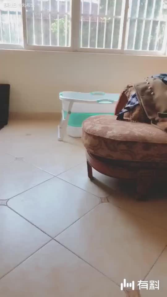 一大早起来不见狗以为跑出去玩了!