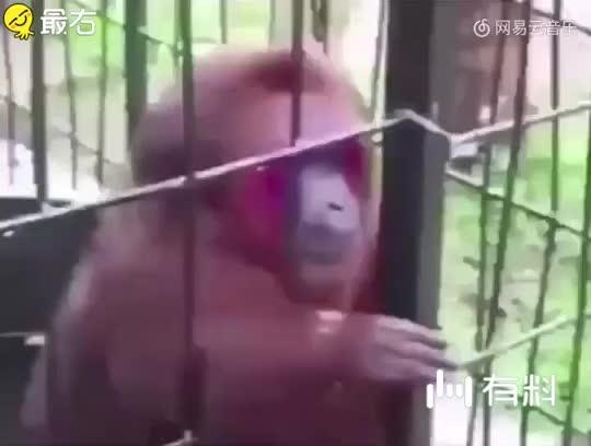 呵呵,这猴子真逗啊