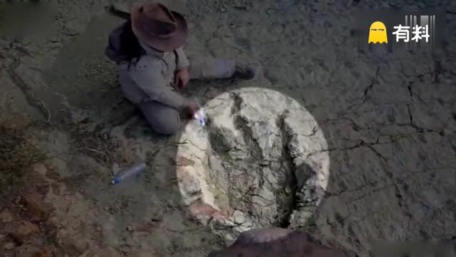 玻利维亚现8000万年前巨型肉食性恐龙脚印 直径1.2米