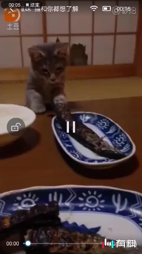 #我也要吃鱼#