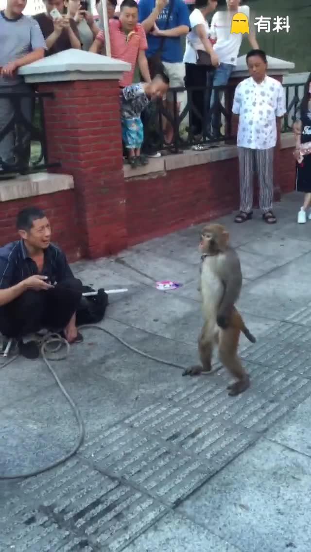 #666#猴子