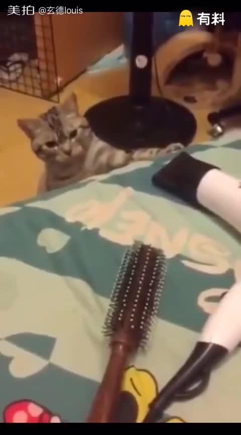 调皮的小猫咪@美拍小助手 我要...