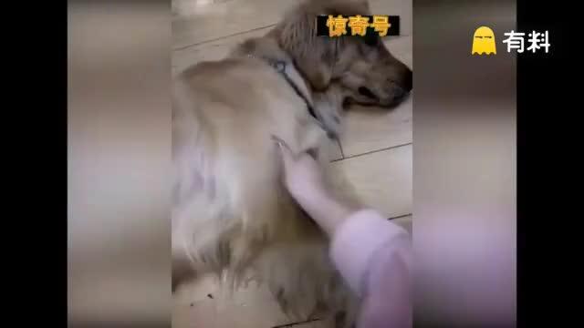 狗狗惊呆了,哈哈哈