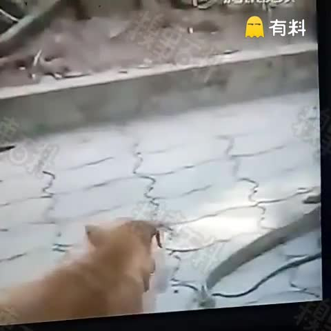 单身狗大战蟒蛇