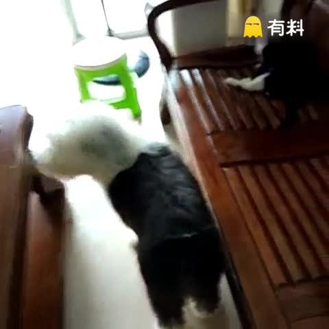 #宠物##家有萌宠##萌萌哒的小...