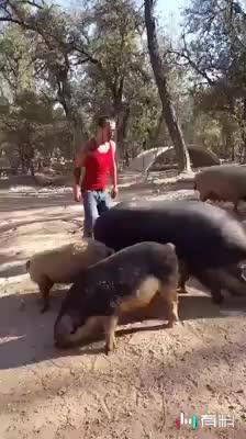 #/高手在民间    骑猪的技巧#