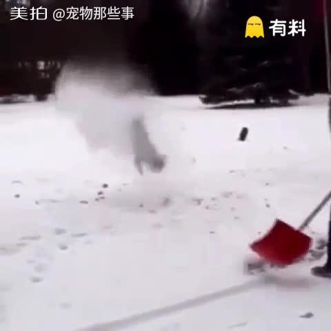 只要一铲雪就能让狗狗后空翻,...