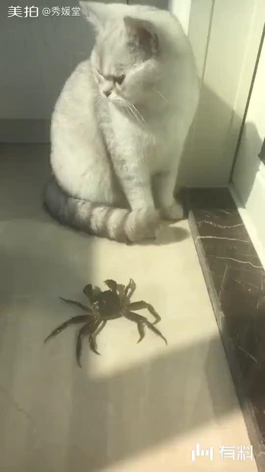 美拍视频: 淡定猫