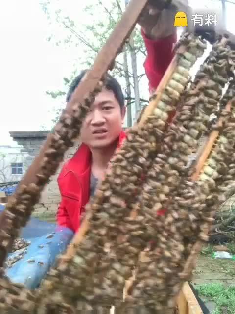 #我要上热门#这是浆框,蜂王浆就是从这一个一个浆杯里取出来的,喜欢养蜂生活