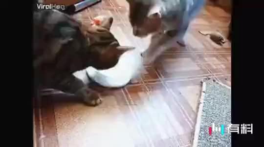 兄弟不是你争我夺