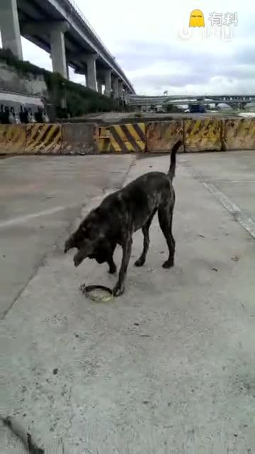 小狗被主人丢弃后一直在原地等待着。附近好心人担心项圈会勒脖子便帮它解了下来。几天后,却拍到这样一幕:小狗把项圈捡了回来,正努力着给自己戴上!可能,它觉得只要戴上项圈,主人就会回来接自己了吧。。
