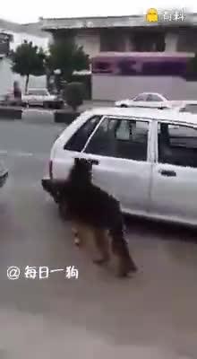 大德牧开门上车关门一气呵成