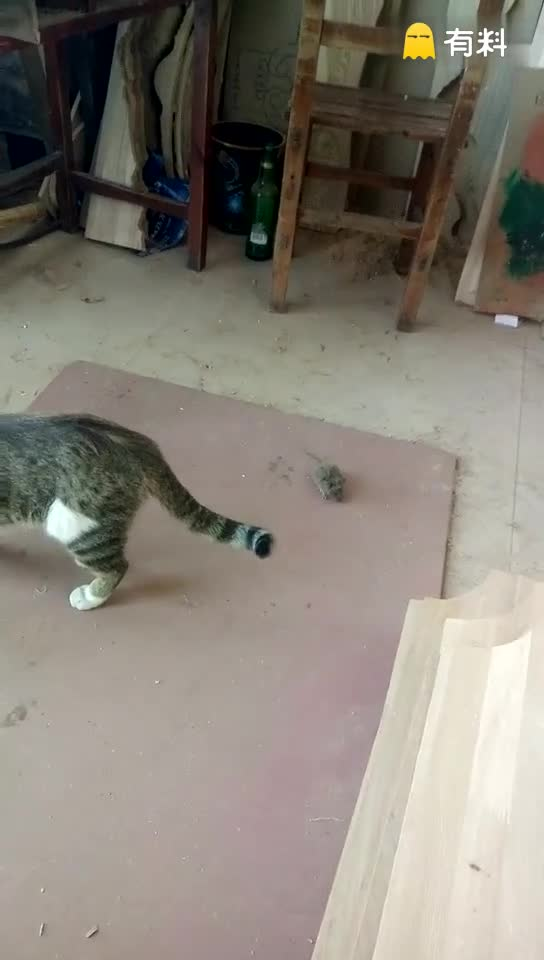 #真实的《猫和老鼠》,汤姆和杰瑞之各走各路!#