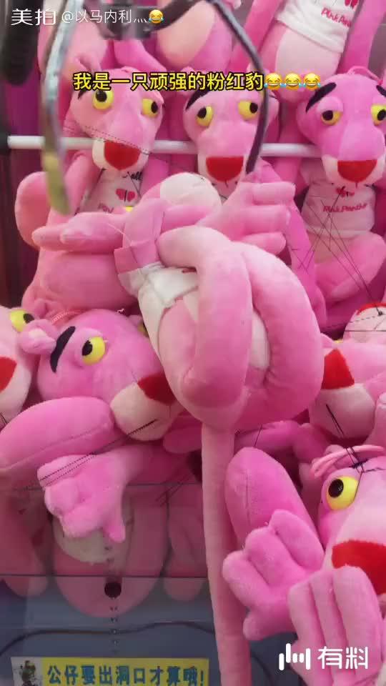 一只很顽强的粉红豹,生拉硬拽!