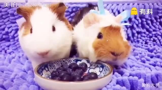 排排坐 吃果果