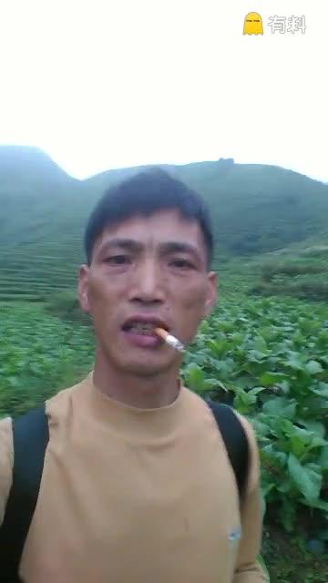 黄烟种植基地