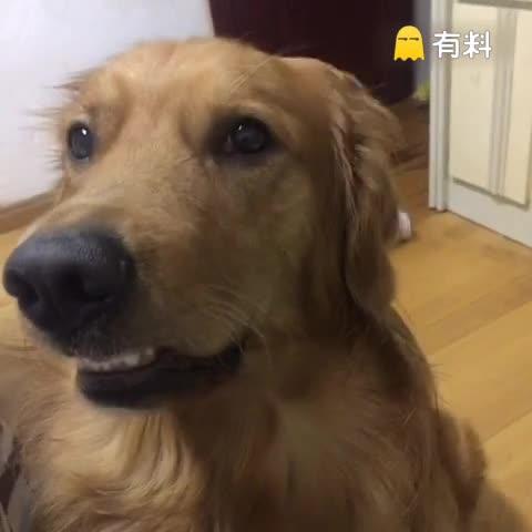 哈哈哈 咬嘴巴好可爱#宠物#