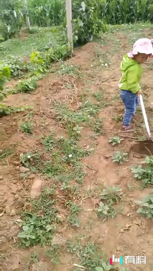 三岁的他,已是劳动的一把好手