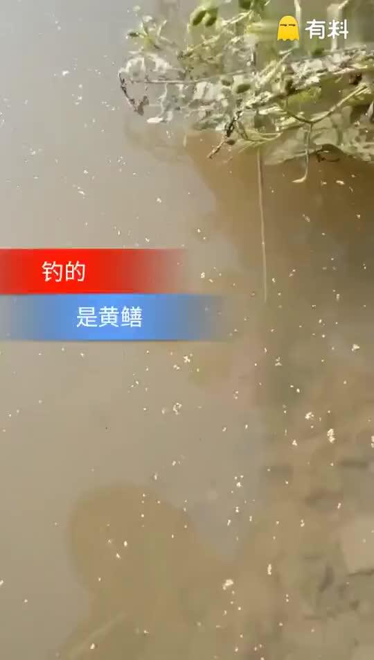 #大神都是这样玩的#看见huangshan了吗?