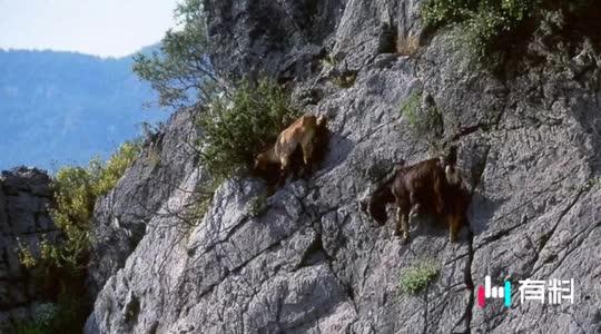 #这山羊蹬起山来简直逆天了!#