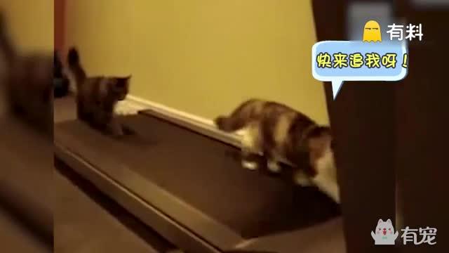 如果一只猫咪教你健身,你会喜欢吗