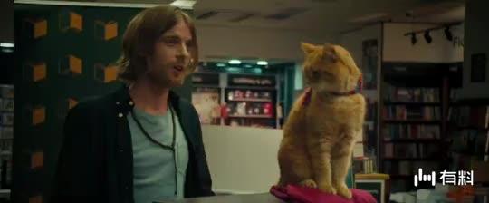 #求片名#流浪猫鲍勃