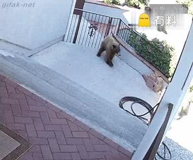 每日一报  熊大熊二的克星  强哥你应该找它做保镖了