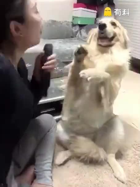 唱的不好狗狗也太夸张了