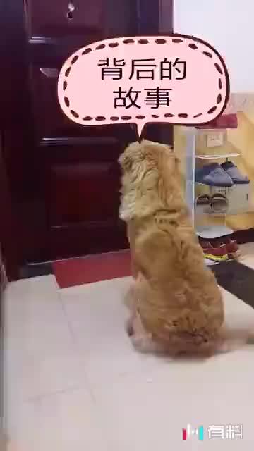 狗狗太棒了~