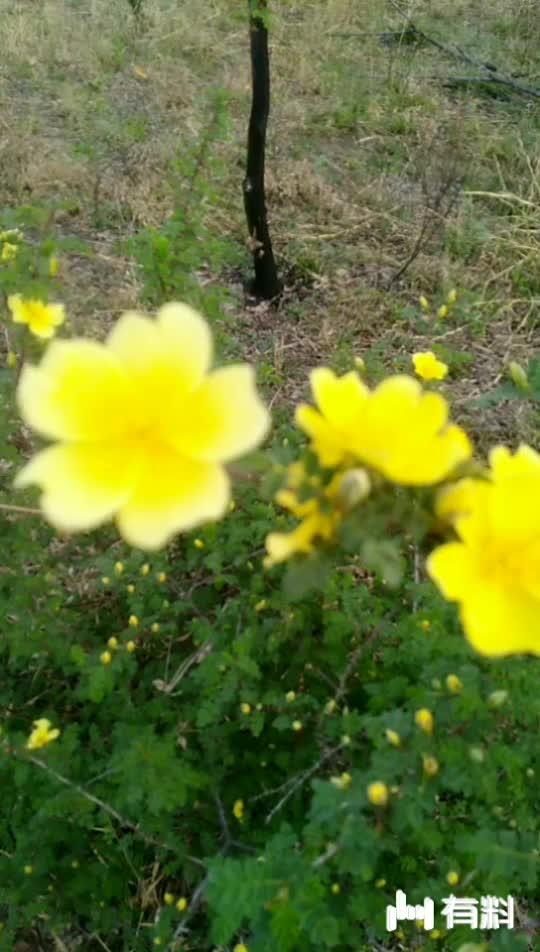 看看这些花