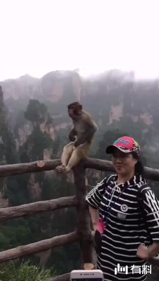 #加关注获取更多精彩视频#猴哥,猴哥,你别这样!