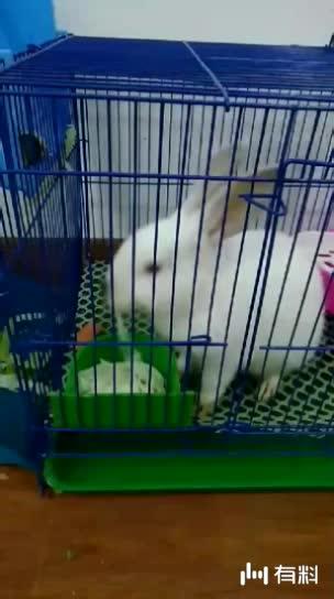从四川重庆到安徽合肥,估计没有哪一只兔子如你般幸运的了吧