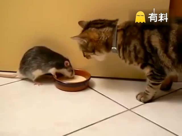 喵也有被鼠欺负的时候呢