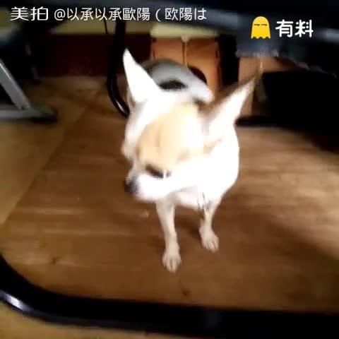 千百個不願意(つД`)尼一直拍...