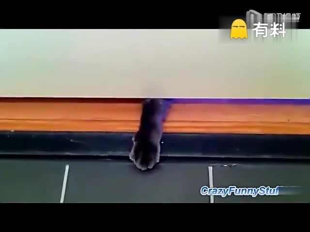 猫咪与厕纸那些事儿