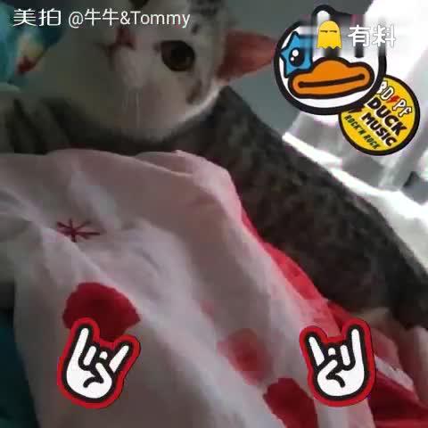 养只小喵陪你变老#猫咪##猫#