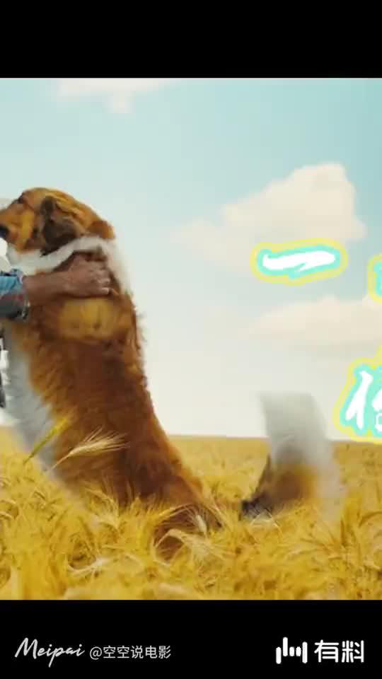 《一条狗的使命2》中集