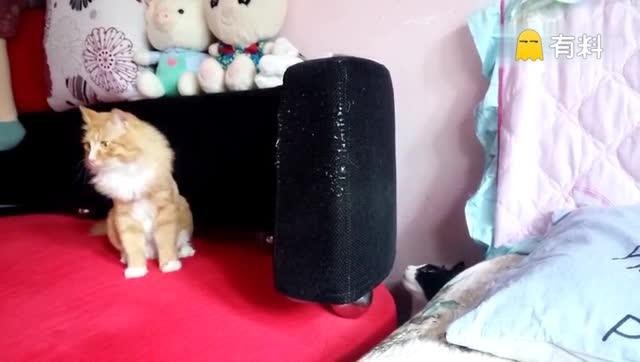 @美拍小助手 #游戏#藏猫猫